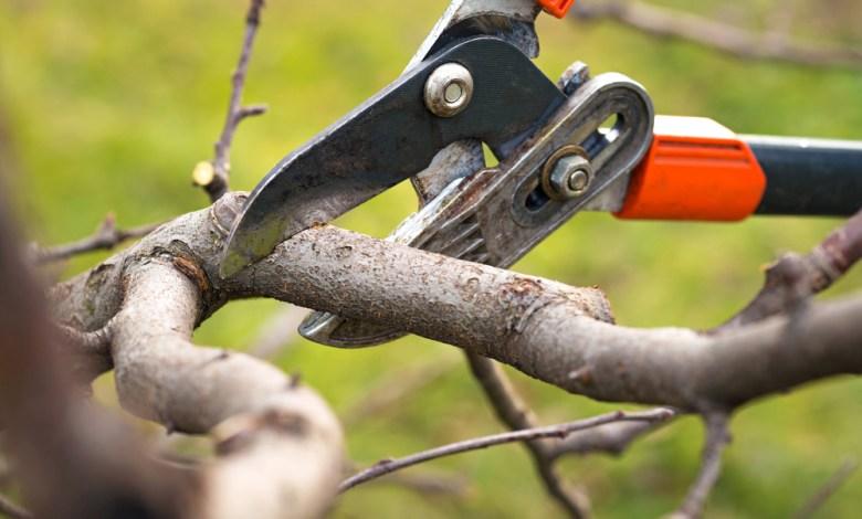 tree-pruning-melbourne