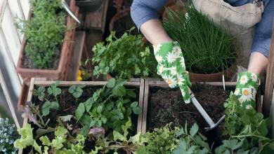 Photo of Benefits of Metallic Greenhouses