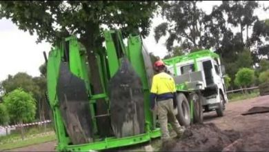 Photo of Why are tree removal services required?