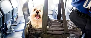 Photo of Step by Step instructions to Choose the Best Airline for Your Pet Policy