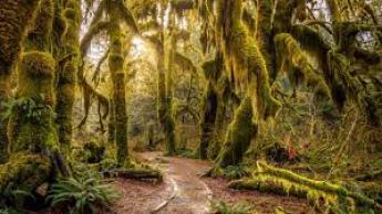 Hoh Rainforest, USA