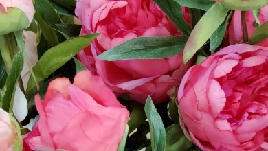 Photo of Mom of the Moment Giveaway – online flowers delivery