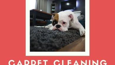 Photo of Carpet Cleaning Gives Freshness in Every Stroke