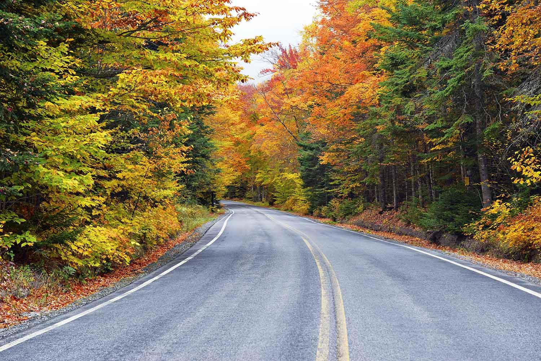 Catskills New York Fall Leaves