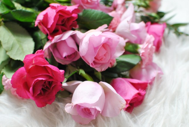 Pink roses me day