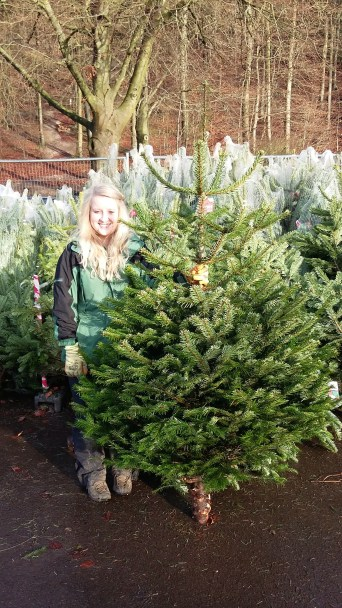 With a lovely Nordmann Fir.