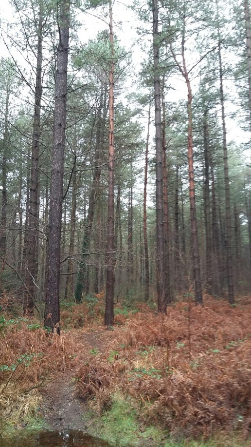 Creech woodland.