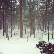 ...snow.