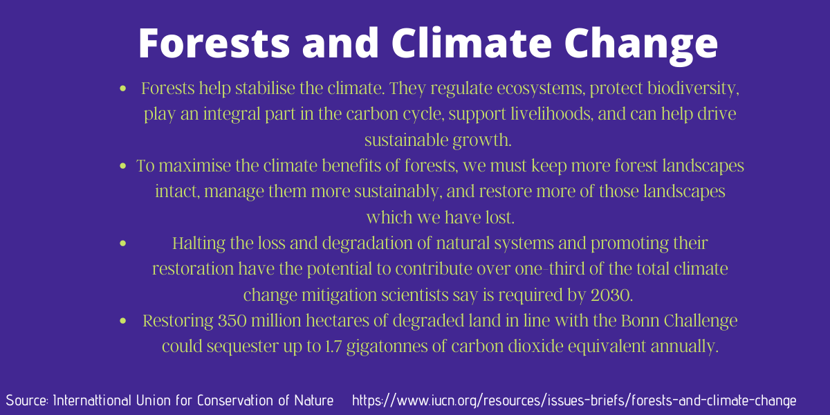 Forests and Climate Change: Facts from the International Union for Conservation of Nature