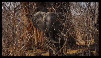 Small Ellie in front of a huge Baobab-Tree, right at the entry gate of Mana Pools NP