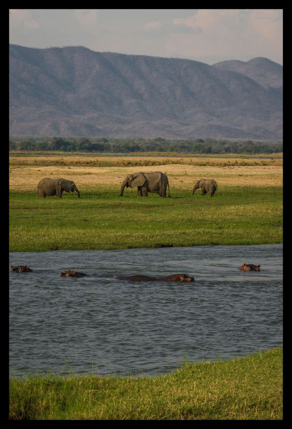 Hippos and elephants at Mana mouth