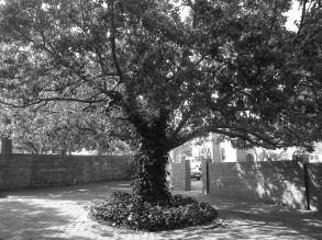 Old Familiar Tree