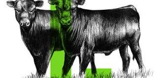Angus beef Bogotá, Angus Lógicos