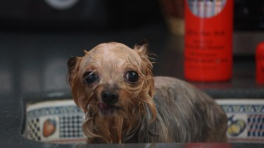 "Tini hates getting a bath. She's all ""save me!!!!!!!!!"""