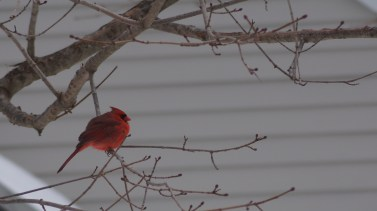 I'm really in love with the way these bird look against the snow.