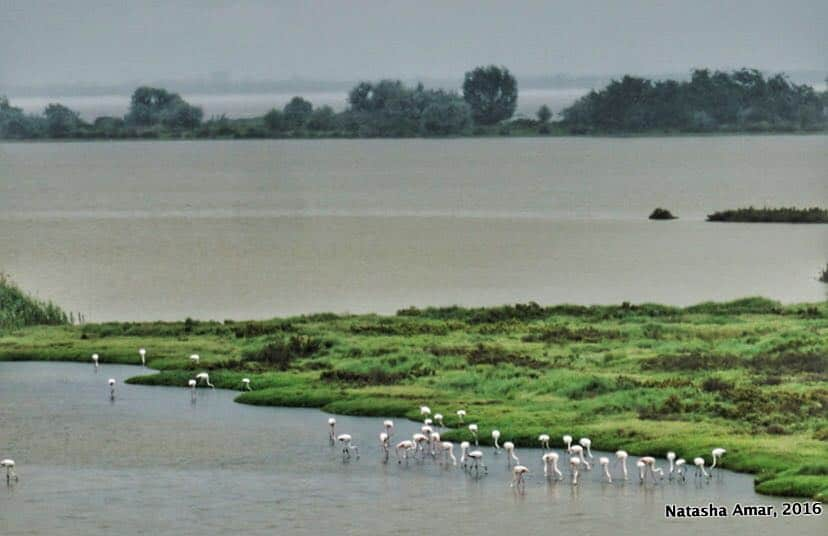 Po Delta Adventures Nature & Wildlife in Emilia Romagna- Flamingo Lagoon