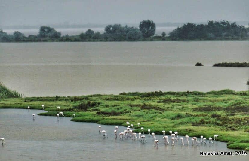 Po Delta Adventures Nature & Wildlife in Emilia Romagna- Flamingo Lagoon
