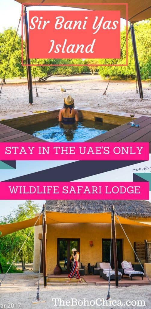 Why You Absolutely Should Not Miss a Trip to the UAE's only Wildlife Safari Sanctuary on Sir Bani Yas Island