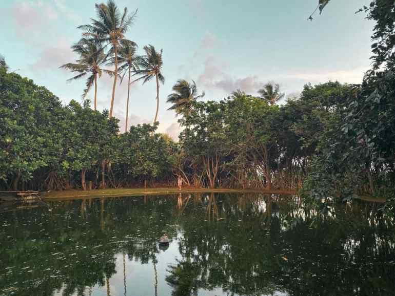 Ayurveda Retreat in Sri Lanka: Barberyn Beach Ayurveda Resort Weligama