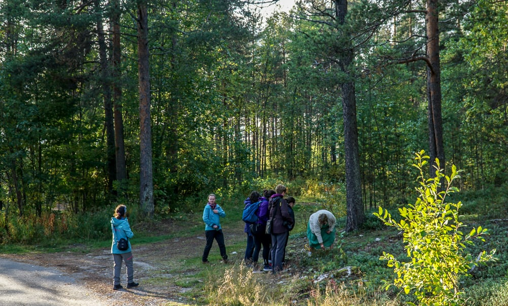 A Taste of the Arctic in Swedish Lapland: Eva offers foraging walks through the forest