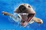 pups_diving5