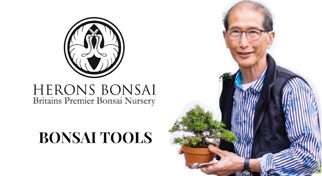 All you need to know about Bonsai Tools