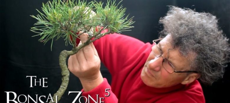 Creating a water and land penjing with a lone pine