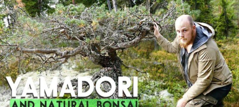 Yamadori Bonsai from Nature