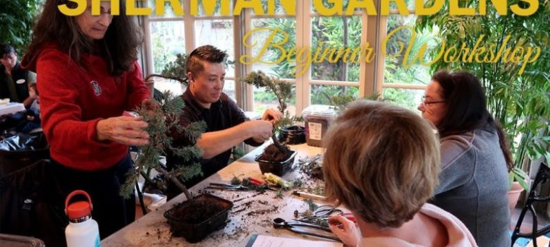 A Day at the Sherman Library and Bonsai Gardens