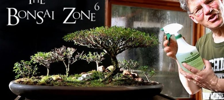 Spider Mites and the African Landscape Bonsai