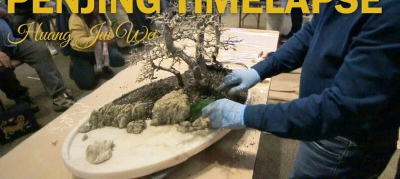 Chinese Penjing One Minute Timelapse