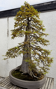 Bonsai Inspiration