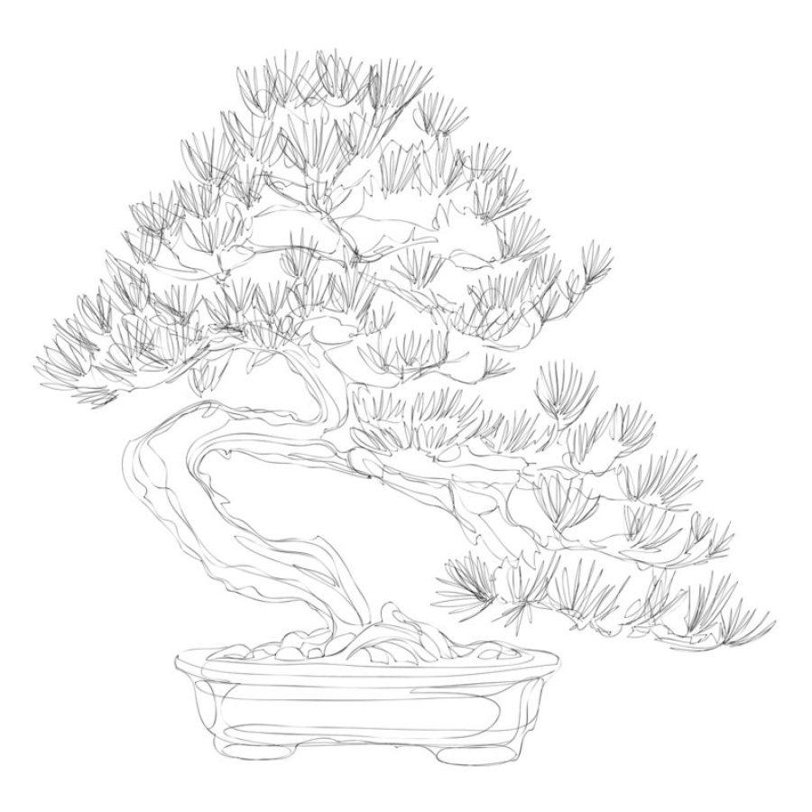 Moyogi Style Bonsai Tree Drawing