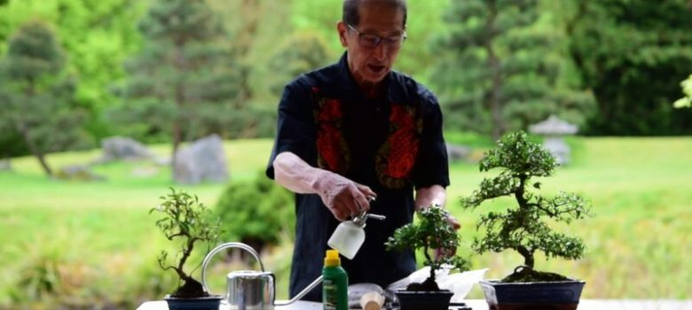 Watering and Feeding Bonsai Trees