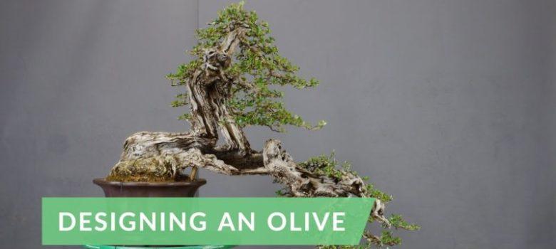 Designing an Olive Bonsai Tree