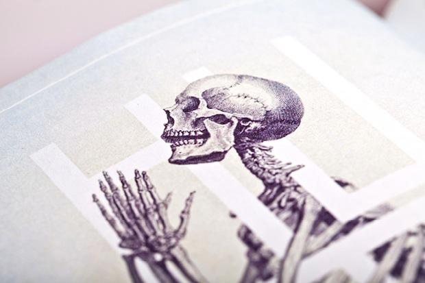 Bone: Anatomy illustration close up