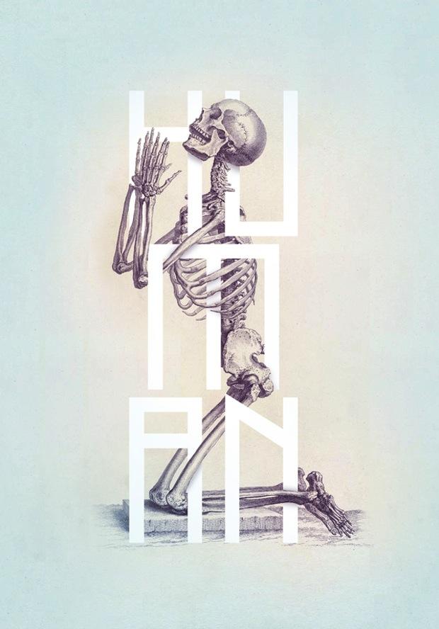 Bone: Anatomy illustration