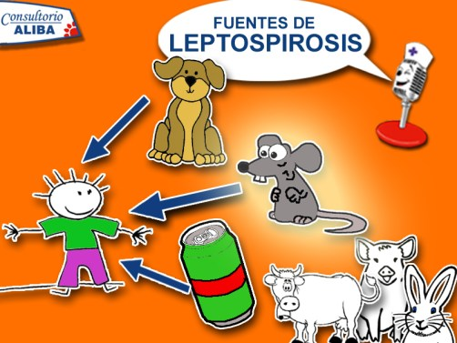 leptospirosis-copiar