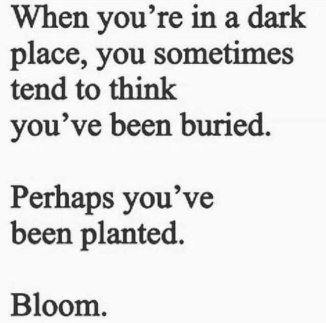 Image may contain: text that says 'When you're in a dark place, you sometimes tend to think you've been buried. Perhaps you've been planted. Bloom.'
