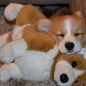 Cozy Pupper