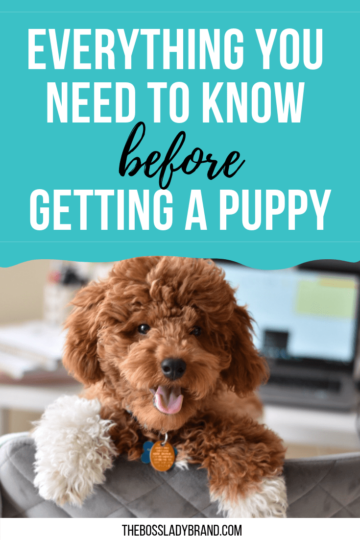 Everything you need to know before getting a new puppy! Puppies are a lot of work and here are things you should know. There is also a puppy checklist! #puppy #cutestpuppy #puppytraining #puppystuff