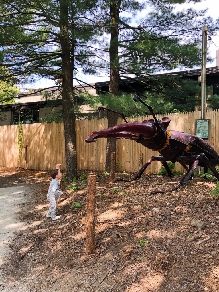 Wicked BIG Bugs - Franklin Park Zoo - The Boston Day Book