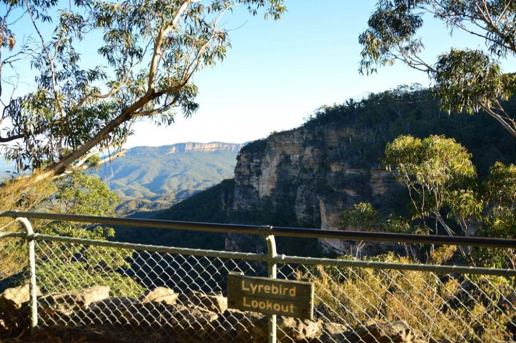 lyrebird lookout in the blue mountains