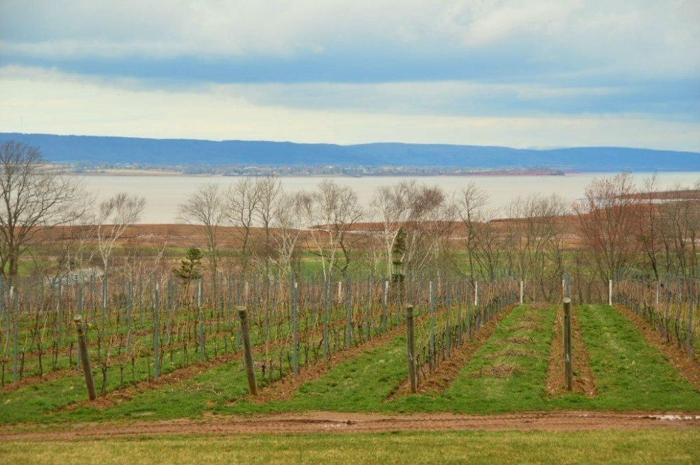 Lightfoot and wolfville vineyards