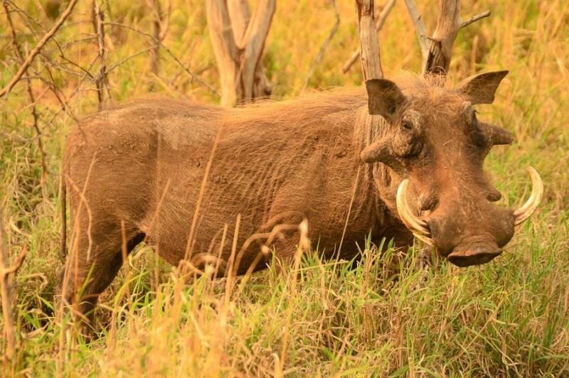 safari images