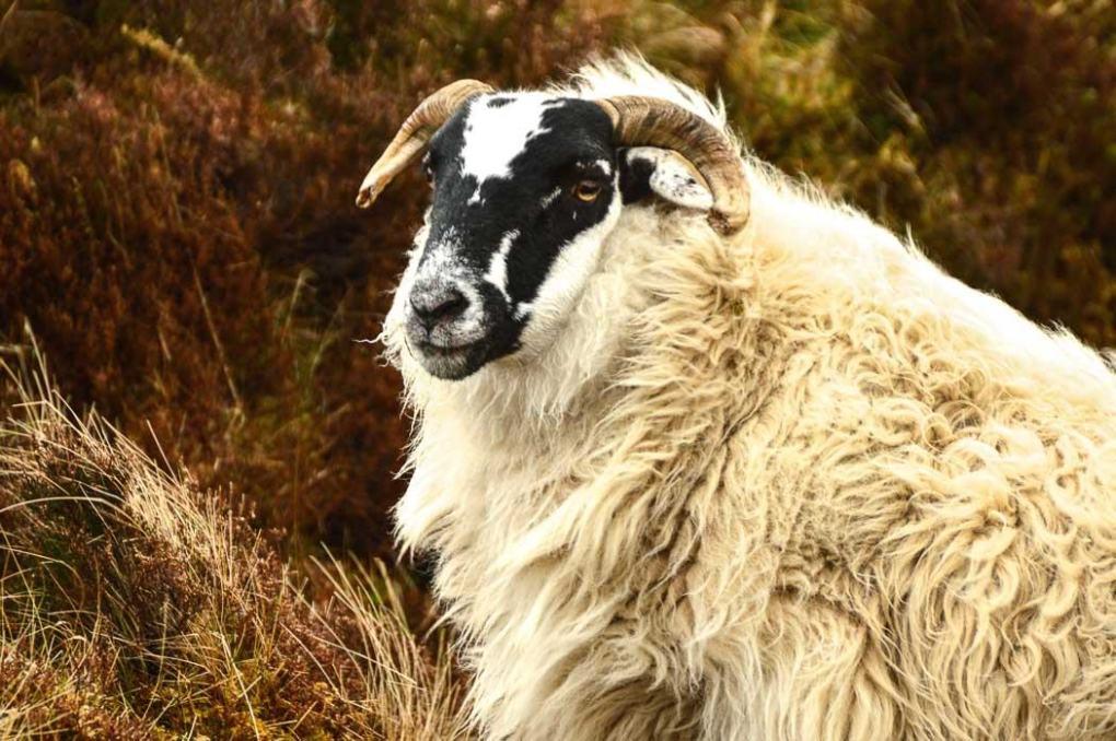 scottish highlands sightseeing