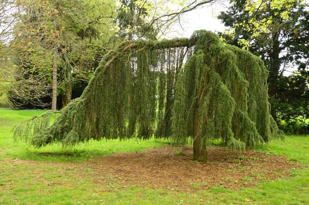 england_cotswolds_westonbirt-arboretum-tree-unusu