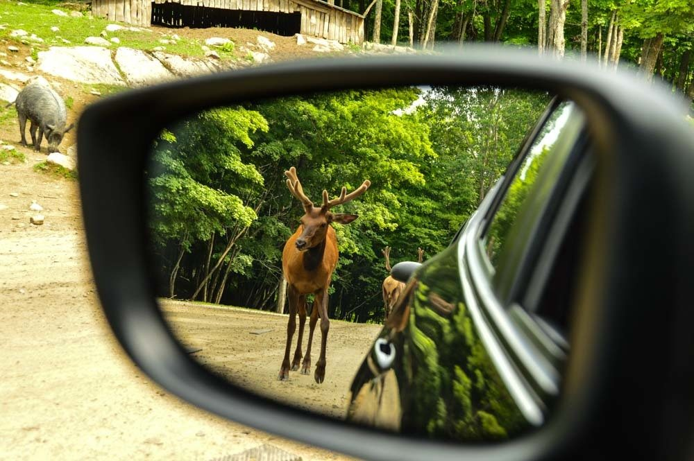 canada_ottawa_parc-omega-moose-in-rearview-mirror