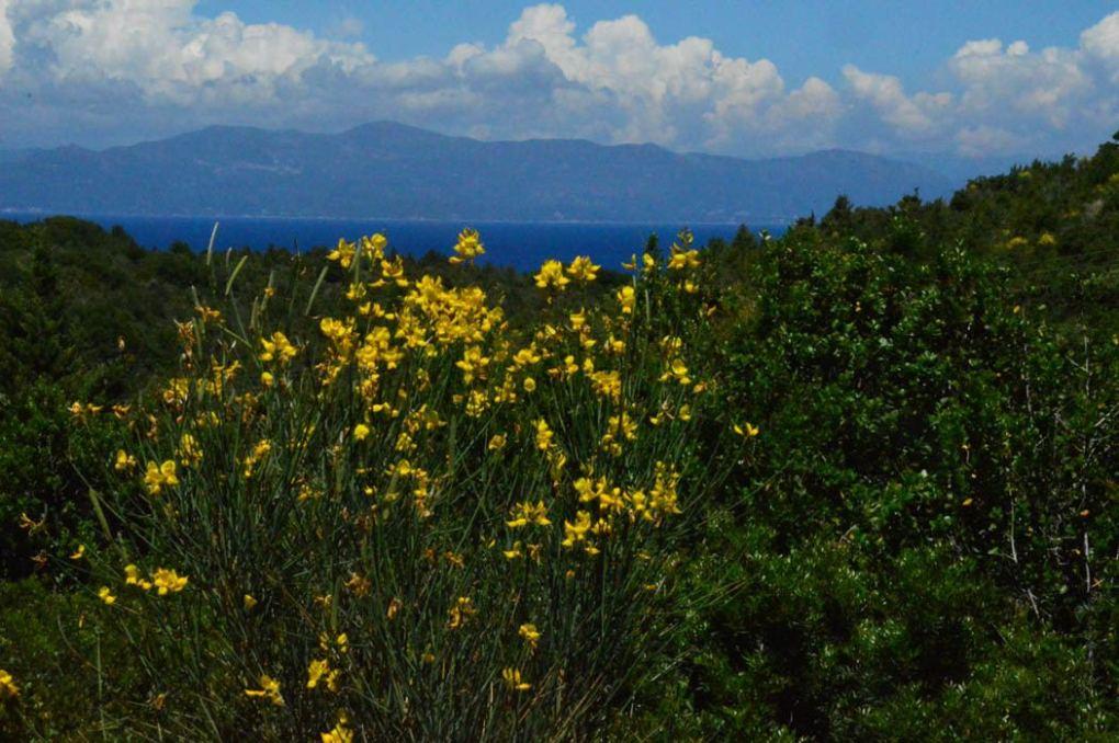 greece_paxos_antipaxos-wildflowers-on-land