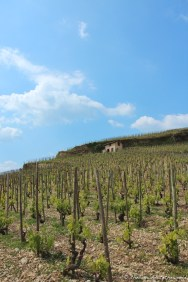 The vineyards of Hermitage